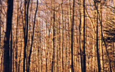 Die Welt wird ein Märchen: wie wir ganz allein durch den Wald finden müssen